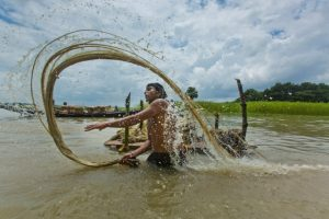 A farmers washing jute fibres in the marsh at a village in Madaripur, Bangladesh.